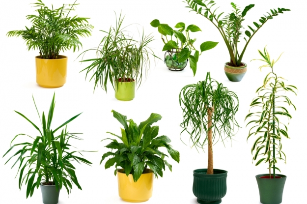 plantas jardim sombra:Different Indoor Plants