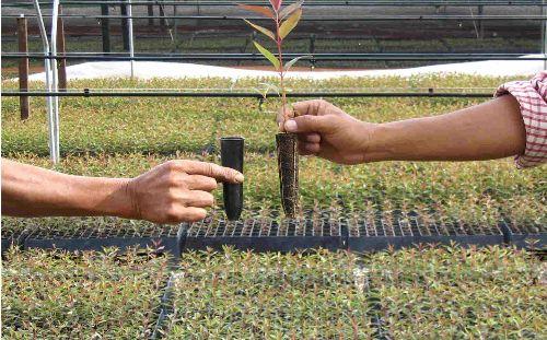 Semillas mejoradas permitirán hacer frente a sequías y heladas
