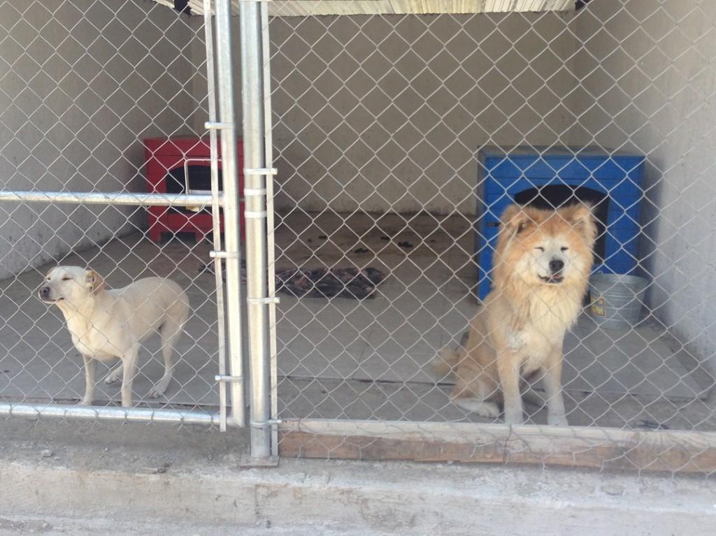 protectora animales perros gatos