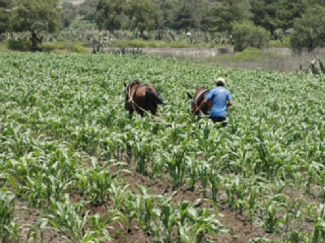 campo agropecuario agricola