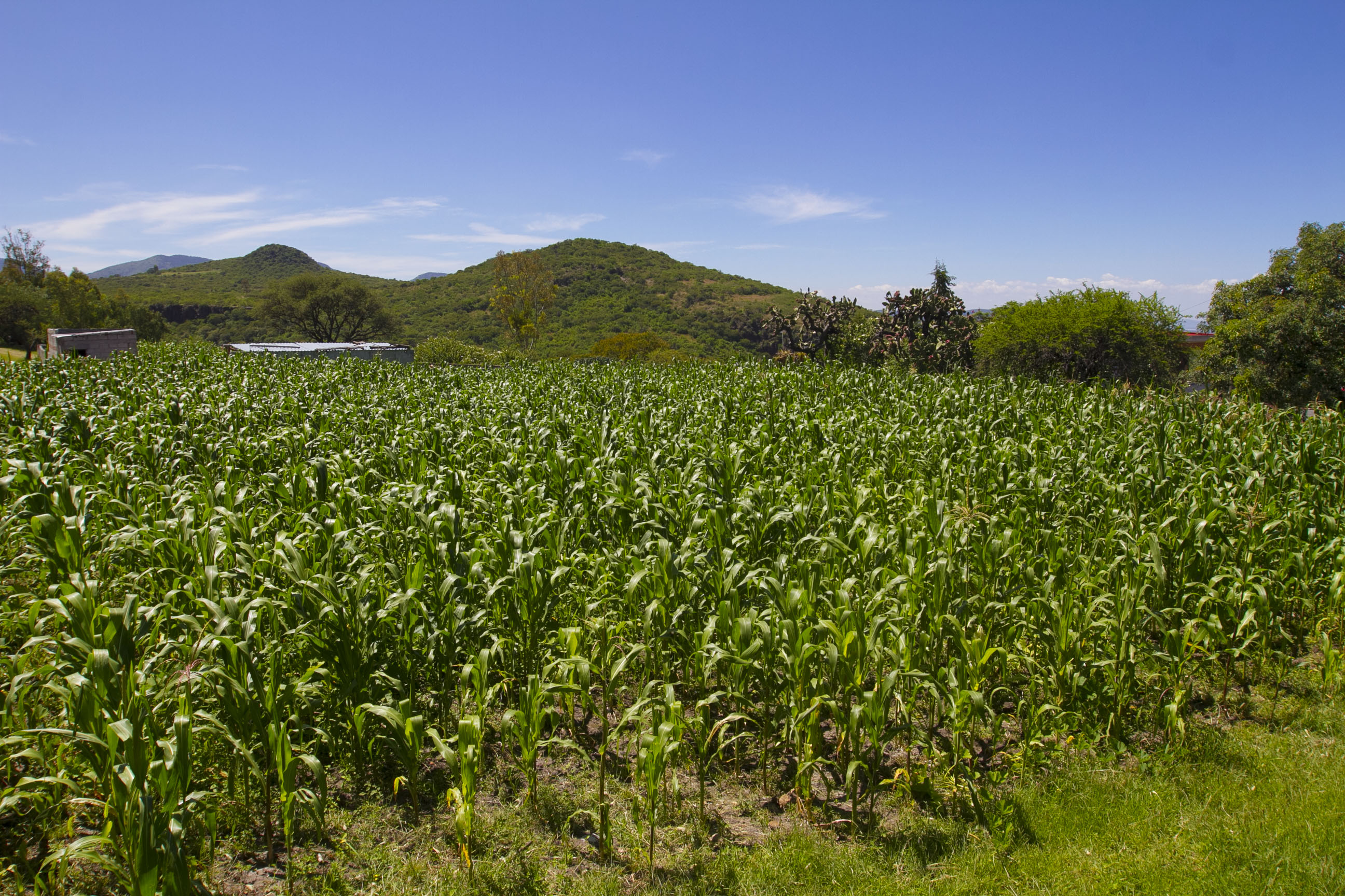 Anuncia SEDEA iniciativa para vincular iniciativa privada con el sector agropecuario
