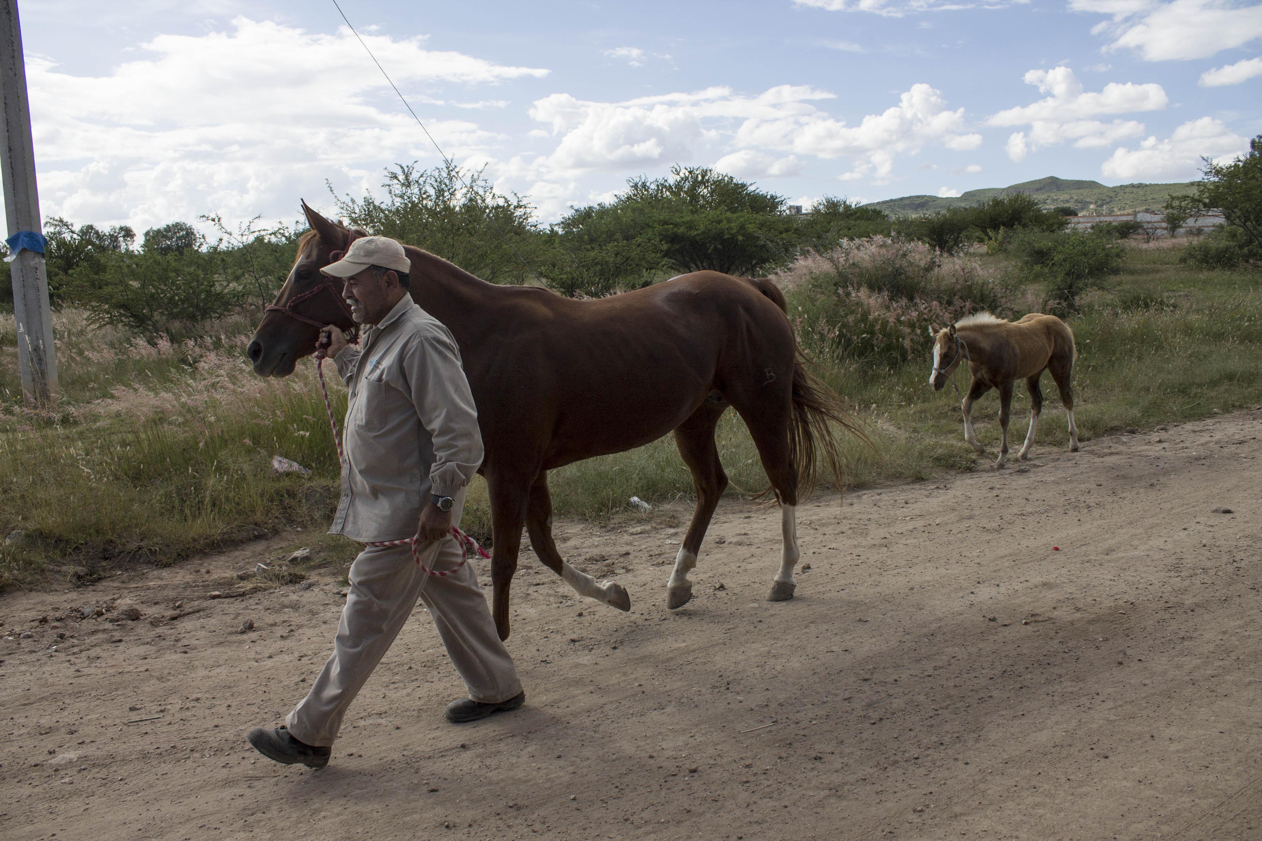 México ve agricultura de conservación como salida ante degradación de suelos
