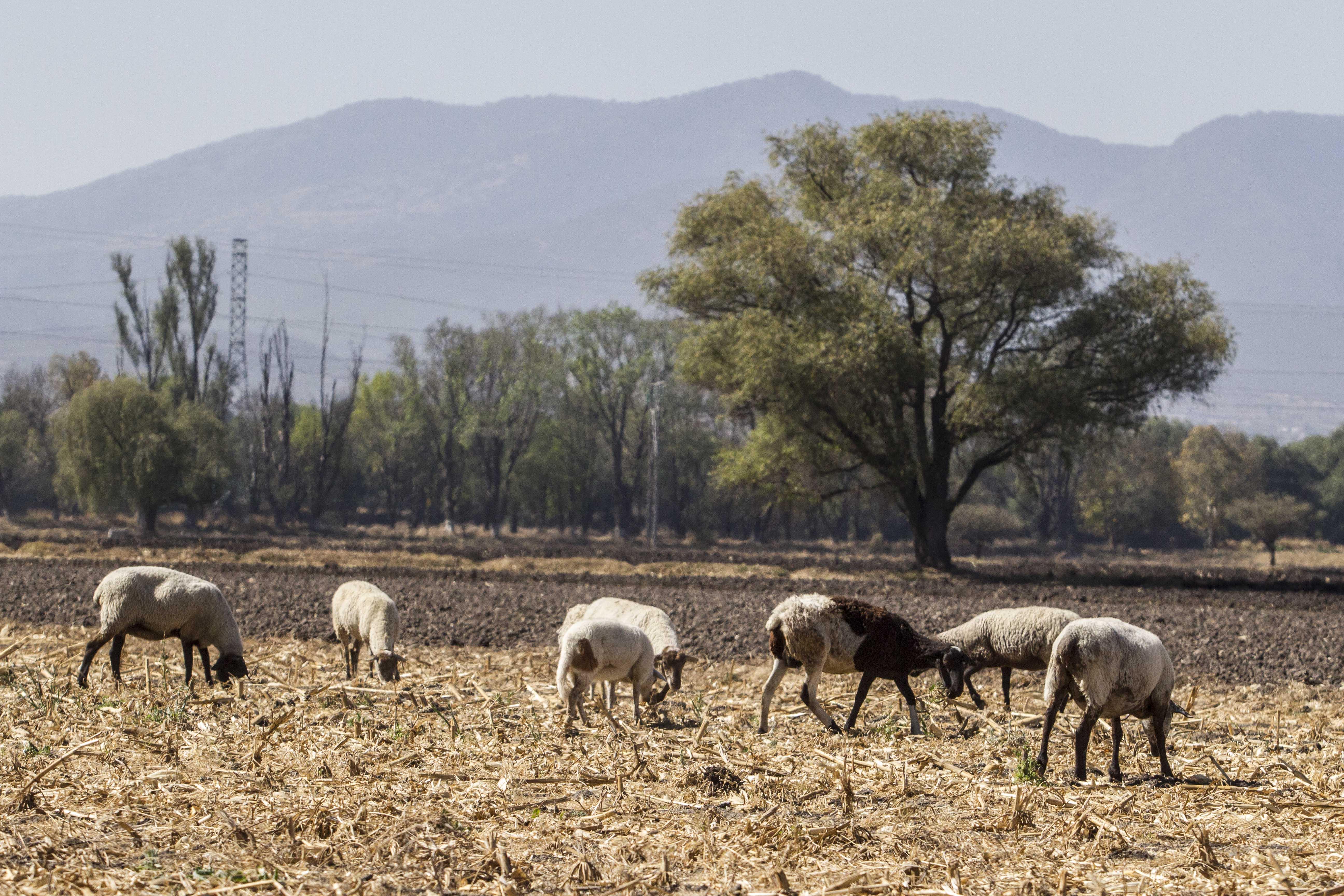 Querétaro, tercer estado a nivel nacional con sequía más grave