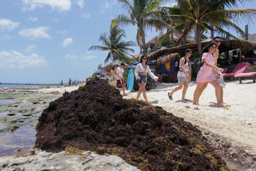 Expertos estiman gigantesco incremento del sargazo en el Caribe mexicano