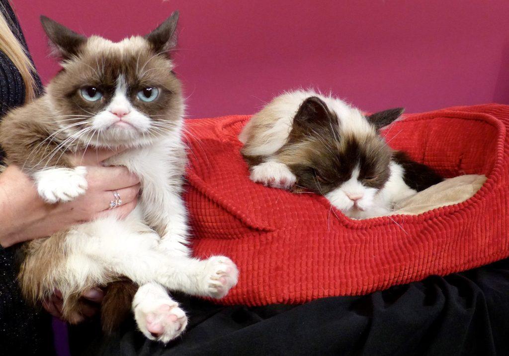 El famoso gato de internet Grumpy Cat muere a los 7 años