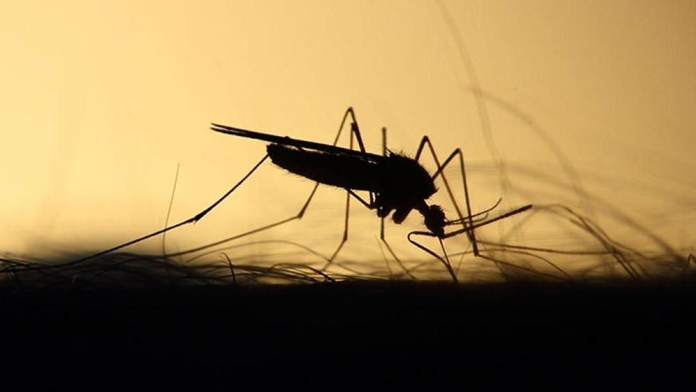 Capital queretana se mantiene libre de dengue: Seseq