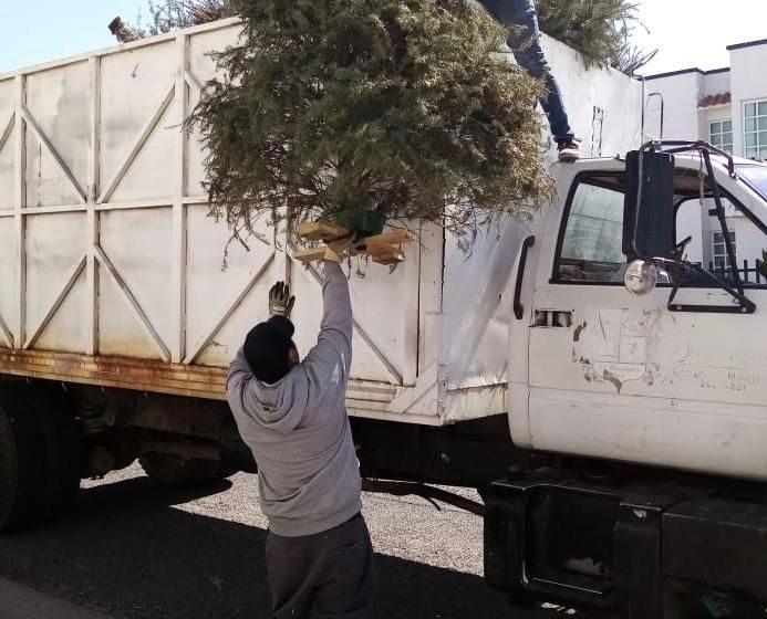 Refuerzan campaña de recolección de árboles navideños en El Marqués