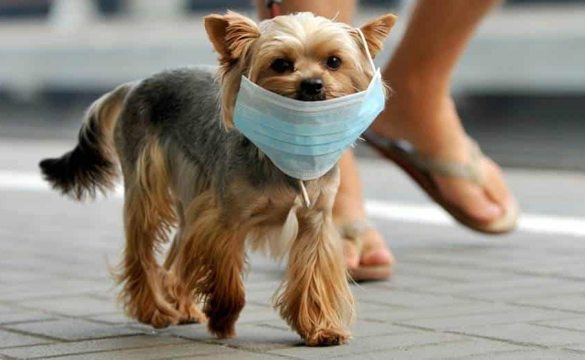 En México, 70% de los perros viven en situación de calle
