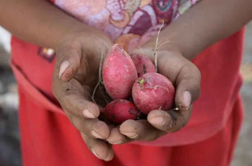 FAO advierte sobre posible crisis alimentaria en América Latina y el Caribe