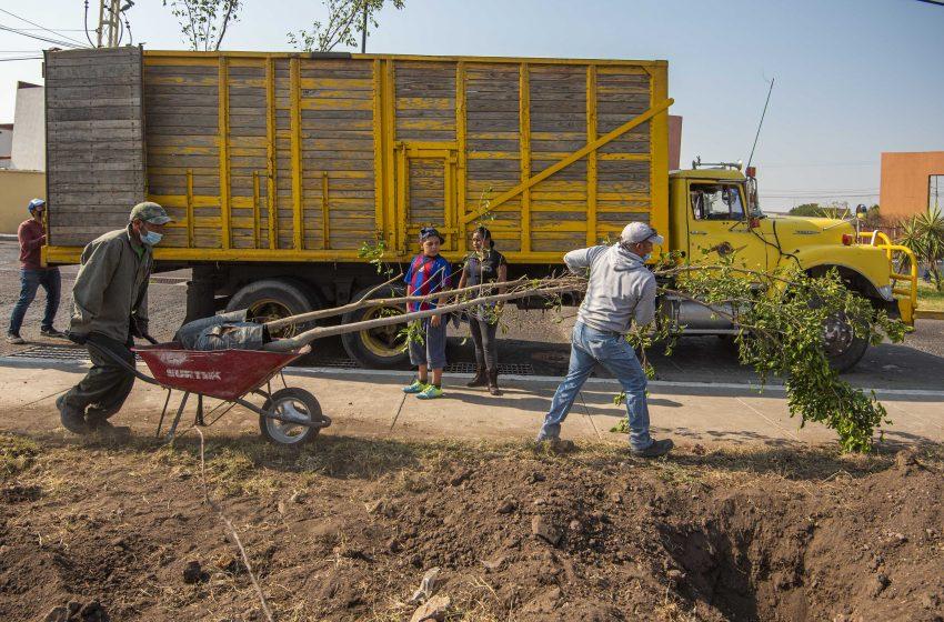 Siembran 280 árboles en fraccionamiento de El Marqués con programa de reforestación