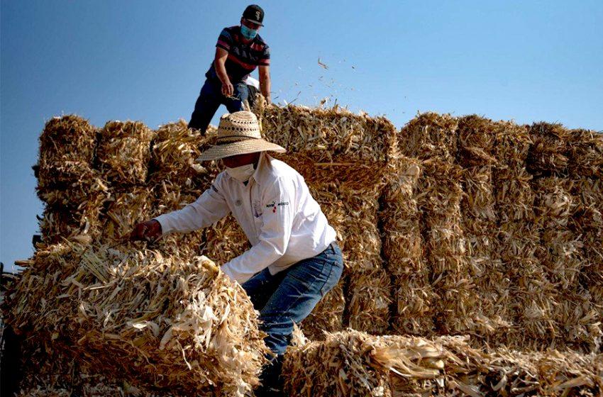 Sector agrícola, ganadero y pecuario de Querétaro, con buenos resultados en 2020