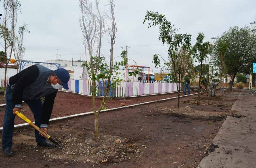 Campaña de reforestación continúa en fraccionamientos de El Marqués