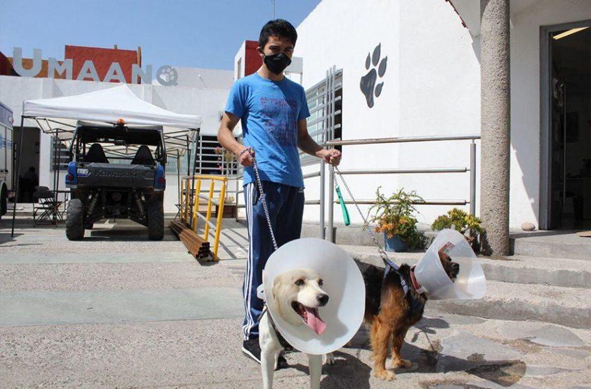 Agosto será el mes de la esterilización de mascotas en Querétaro