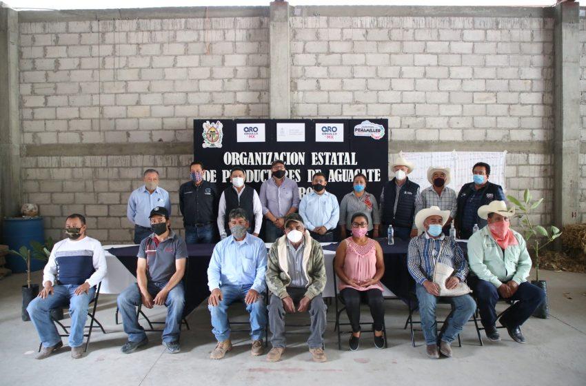 Conforman Asociación de productores de aguacate en Querétaro
