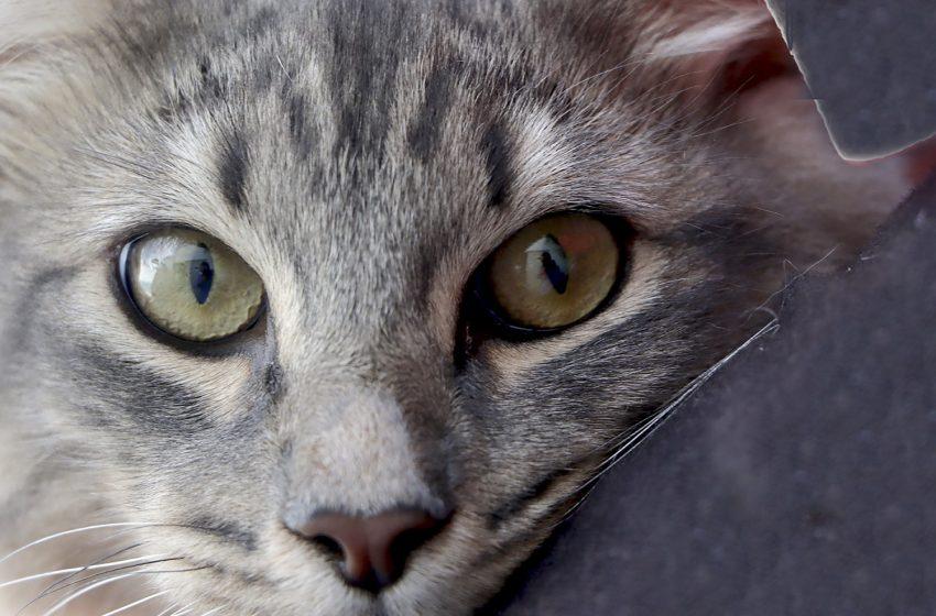 Aplican más de 3 mil vacunas gratuitas contra la rabia entre mascotas de Corregidora