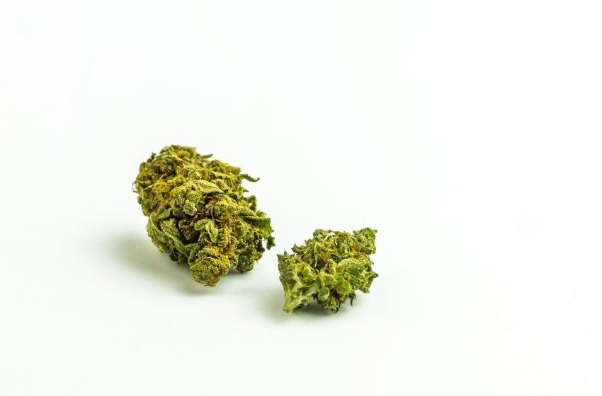Cannabis, la reforma pendiente