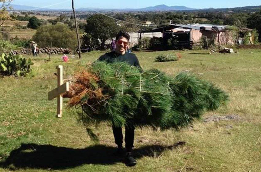 Árboles de navidad de Amealco, negocio que prevalece pese a COVID