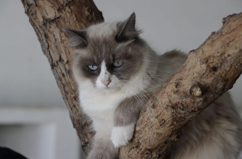 Arranca campaña de esterilización de gatos en Corregidora