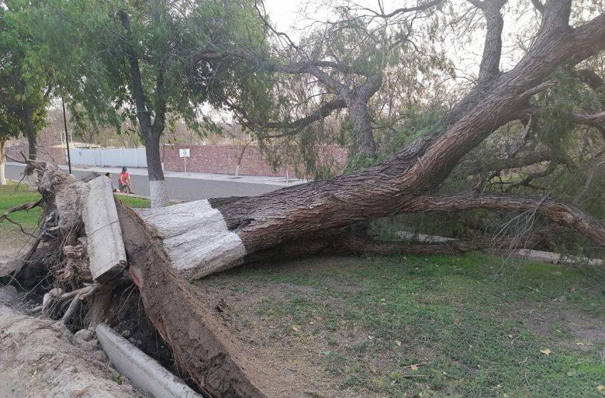 Ráfagas de aire provocaron caídas de árboles en Querétaro