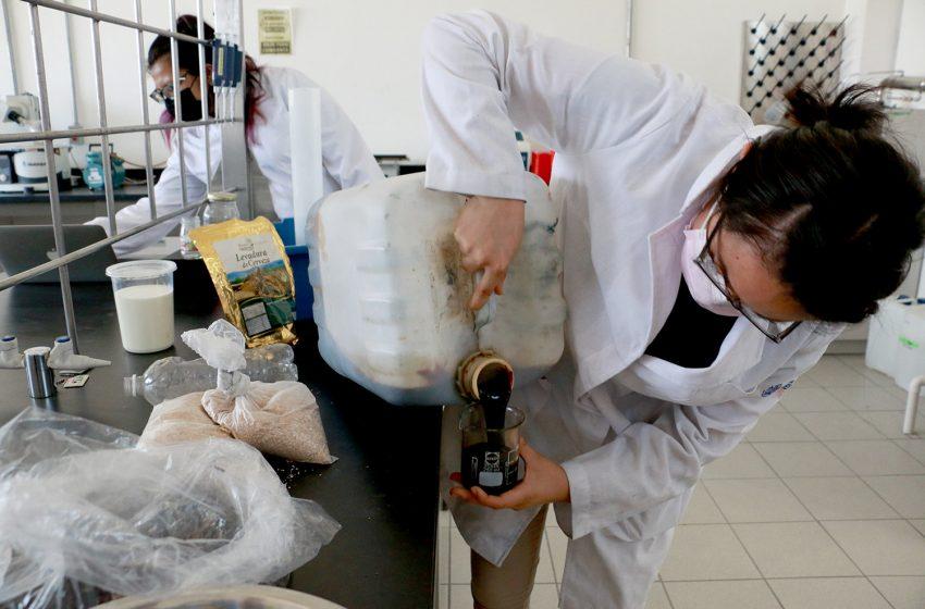 Reproducen en la UTC microorganismos eficientes para la degradación de residuos