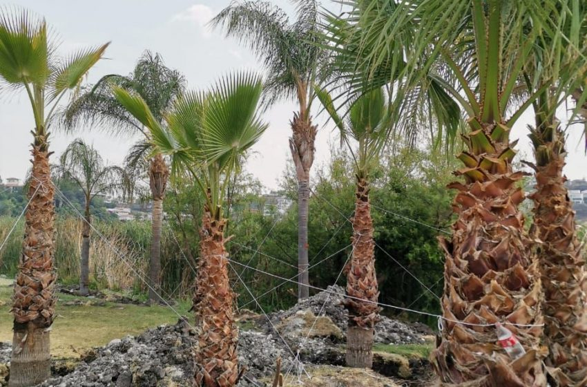 Descarta municipio construcción irregular en Juriquilla