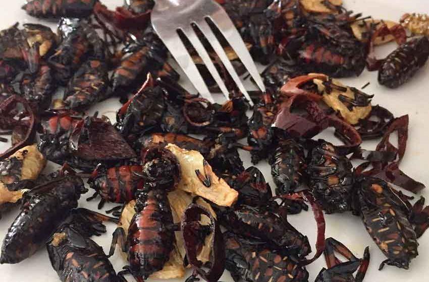 Egresados de la UAQ emprenden proyecto para criar insectos comestibles
