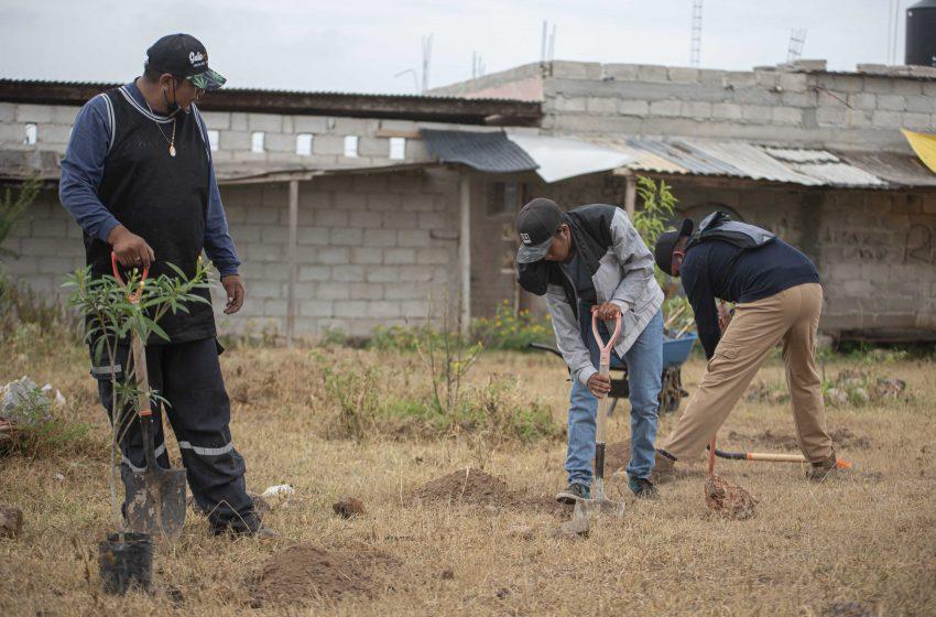 Llevan a cabo jornada de reforestación en El Marqués