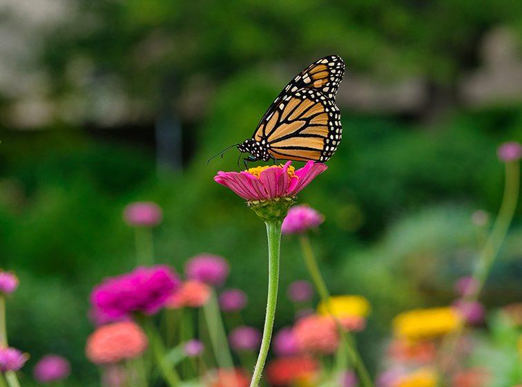 Apresuran vacunación ejidatarios del santuario de mariposa monarca para reabrir la 3a semana de noviembre